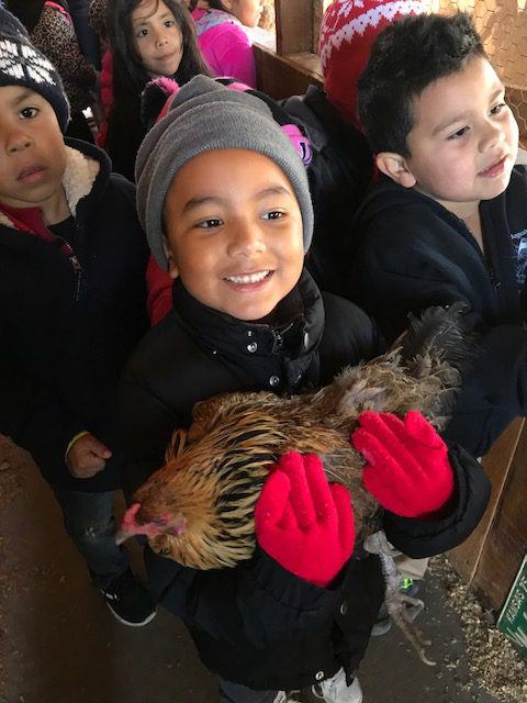 New Stanley student gets an opportunity to hold a chicken.