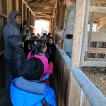 Students look and learn about chickens.